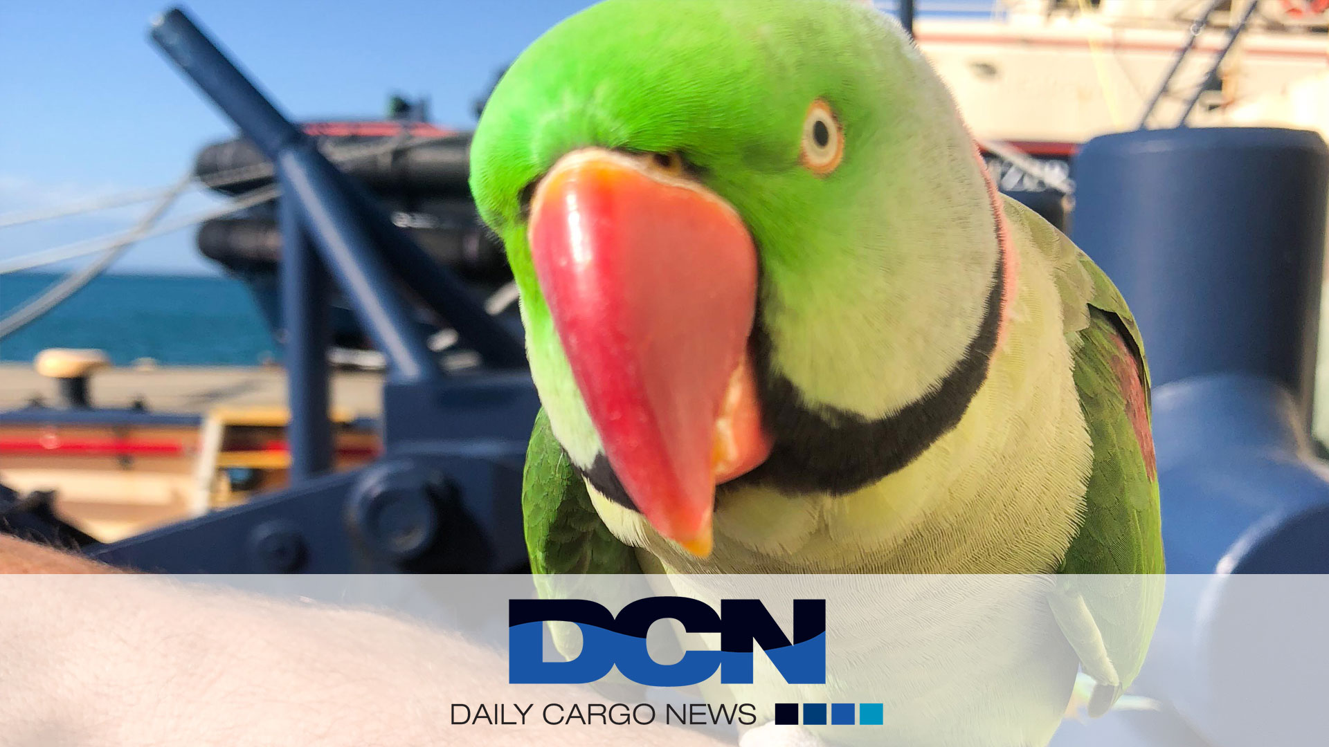 Tug crew rescues parrot